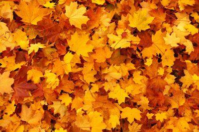 autumn 83761 1280